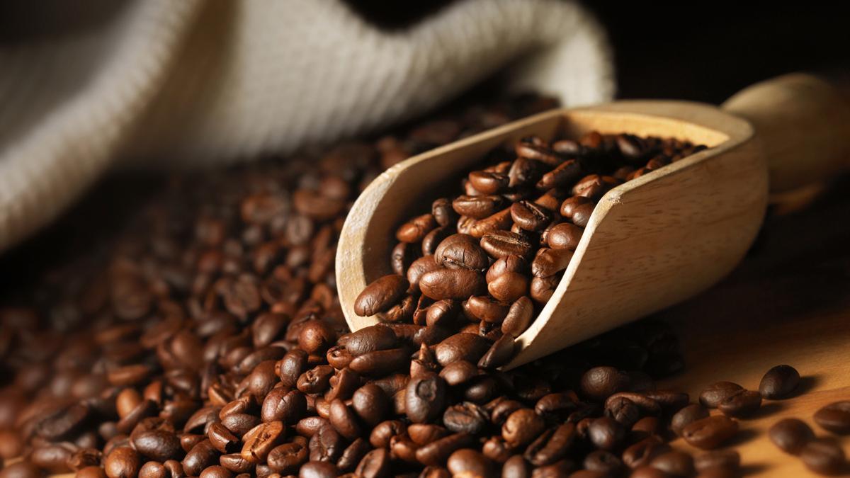 Cà phê xanh lùn ts5